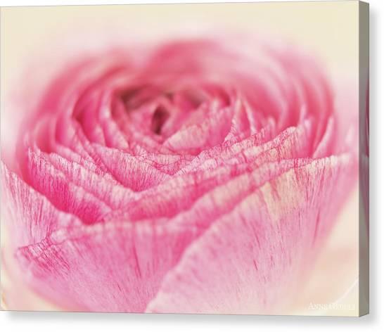Canvas Print - Blooming Rose by Anne Geddes
