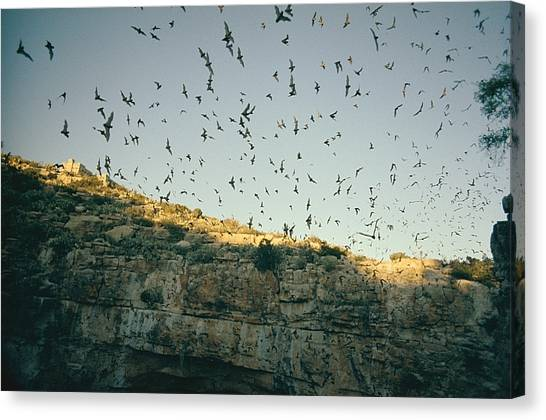 Carlsbad Caverns Canvas Print - Untitled by Walter Meayers Edwards