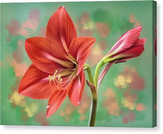 Amaryllis #1 Canvas Print
