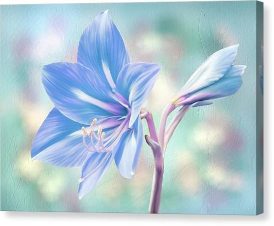 Amaryllis #2 Canvas Print