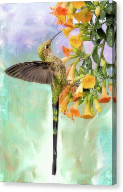 Black Tailed Trainbearer Canvas Print