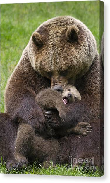 Mother Bear Cuddling Cub Canvas Print
