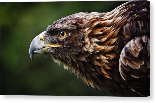 Starlings Canvas Print - Eagle by Jackie Russo