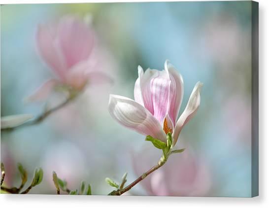 Shrub Canvas Print - Magnolia Flowers by Nailia Schwarz