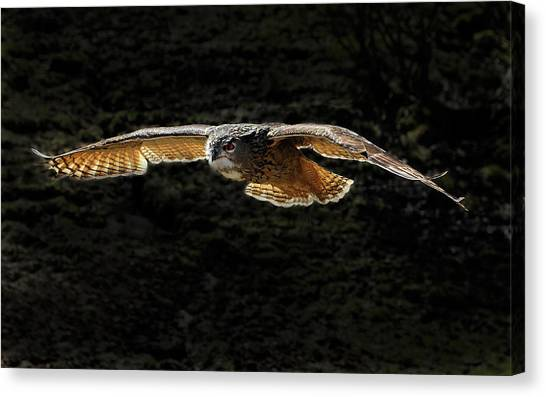 Sea Turtles Canvas Print - Owl by Super Lovely