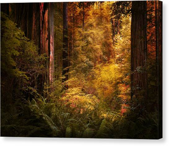 Redwood Forest Canvas Print - 1704 by Peter Holme III