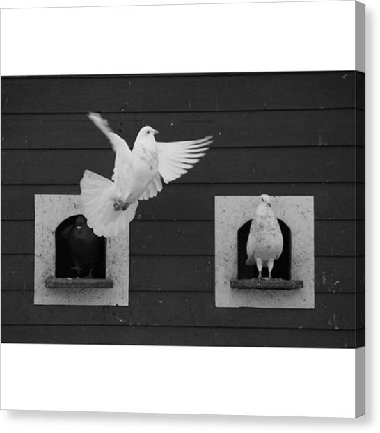 Dove Canvas Print - Instagram Photo by Patrick Leeflang