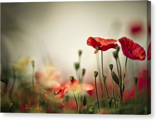 Vegetables Canvas Print - Poppy Meadow by Nailia Schwarz