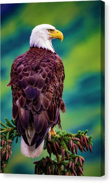 Canvas Print featuring the photograph Bald Eagle by Norman Hall