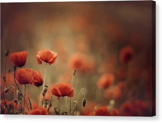 Corn Canvas Print - Poppy Meadow by Nailia Schwarz