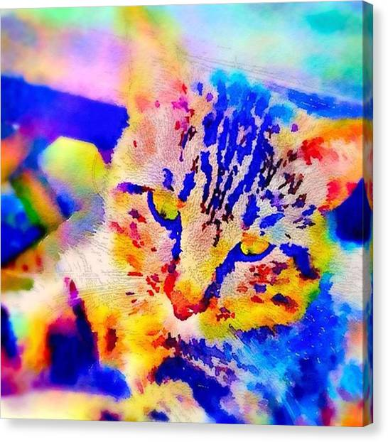 Watercolor Canvas Print - Cat Watercolor Square by Jennifer Richter