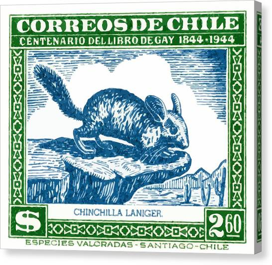 Chilean Canvas Print -  1948 Chile Long Tailed Chinchilla Postage Stamp by Retro Graphics