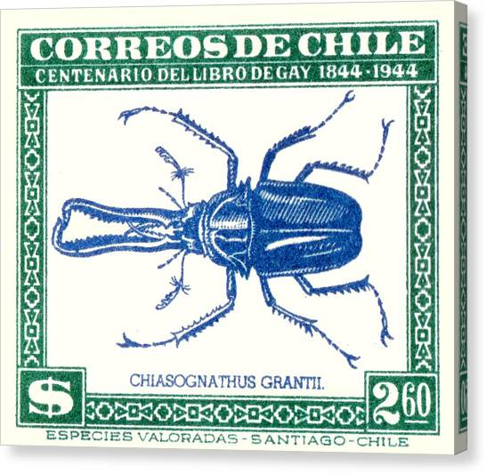 Chilean Canvas Print - 1948 Chile Stag Beetle Postage Stamp by Retro Graphics