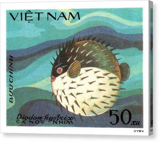 Vietnamese Canvas Print - 1984 Vietnam Spotted Porcupinefish Postage Stamp by Retro Graphics