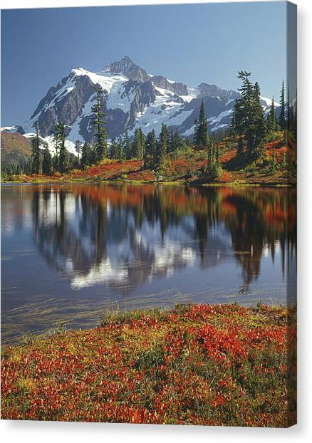 1m4208 Mt. Shuksan And Picture Lake Canvas Print