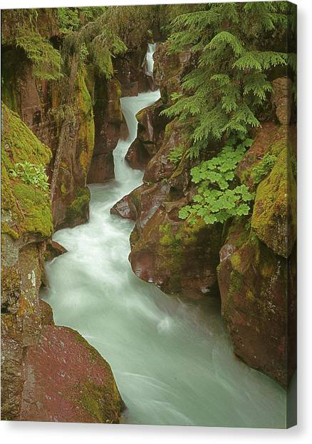 1m8115 Avalanche Gorge Mt Canvas Print