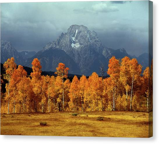 1m9235 Mt. Moran In Autumn Canvas Print