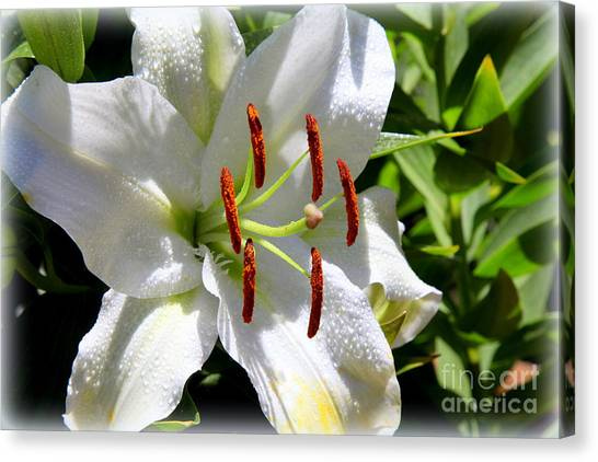 1st Lilly Canvas Print by Kip Krause