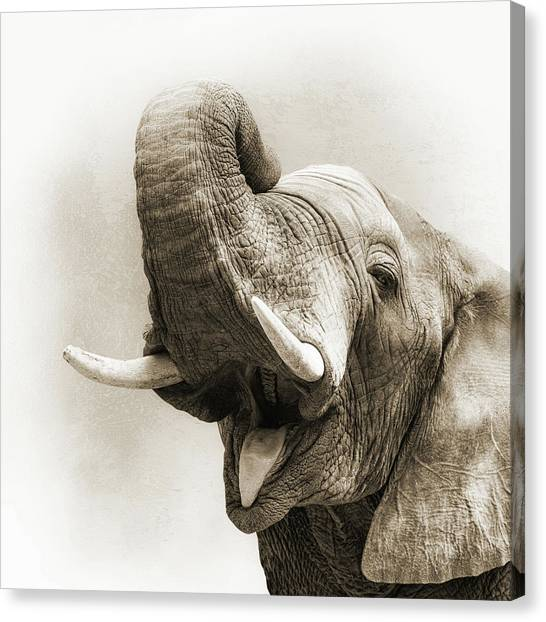 Elephants Canvas Print - African Elephant Closeup Square by Susan Schmitz