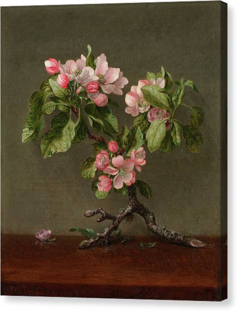Fruit Trees Canvas Print - Apple Blossoms by Martin Johnson Heade