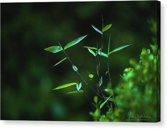 Canvas Print featuring the photograph At Peace by Gene Garnace