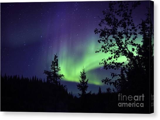 Northwest Territories Canvas Print - Aurora Borealis Above The Trees by Jiri Hermann