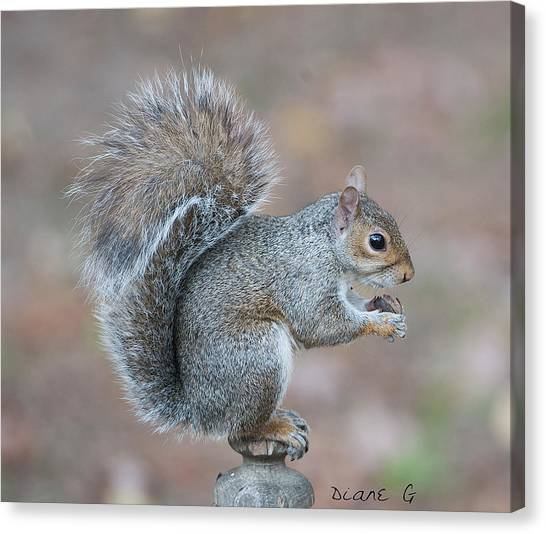 Autumn Squirrel Canvas Print