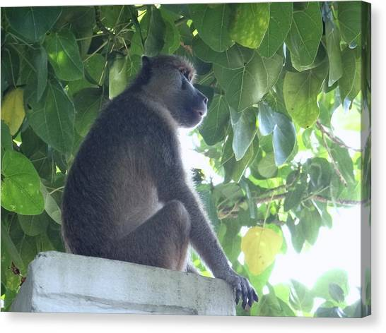 Education By Traveling Canvas Print - Baboon Sits Guard  by Exploramum Exploramum