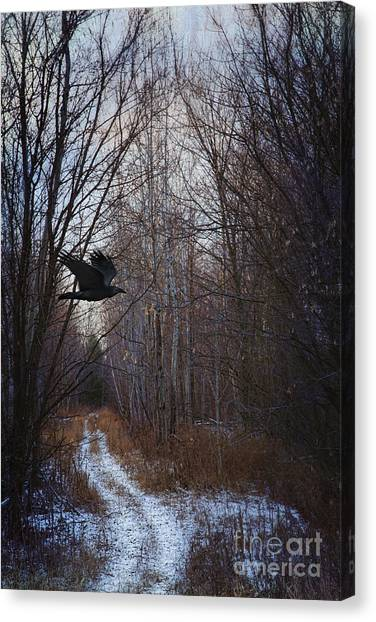 Black Bird Flying By In Forest Canvas Print