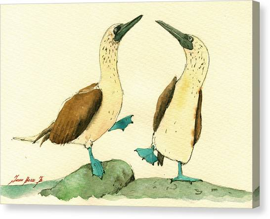 Feet Canvas Print - Blue Footed Boobies by Juan  Bosco