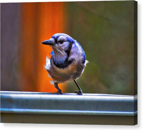 Canvas Print featuring the photograph Bluejay by Robert L Jackson