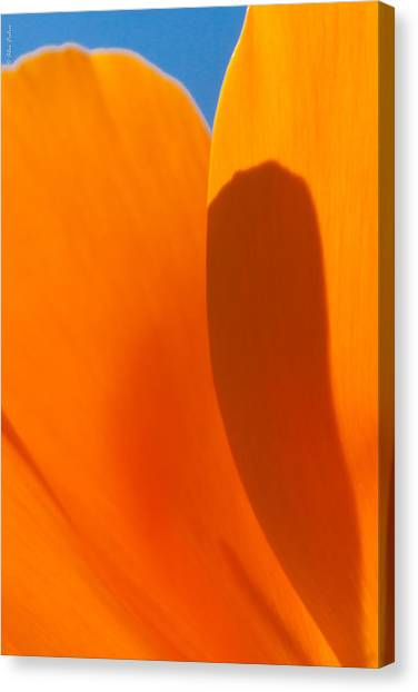 Californian Poppies Canvas Print