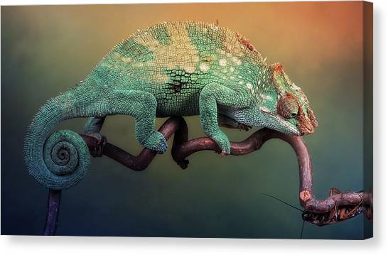 Iguanas Canvas Print - Chameleon by Jackie Russo