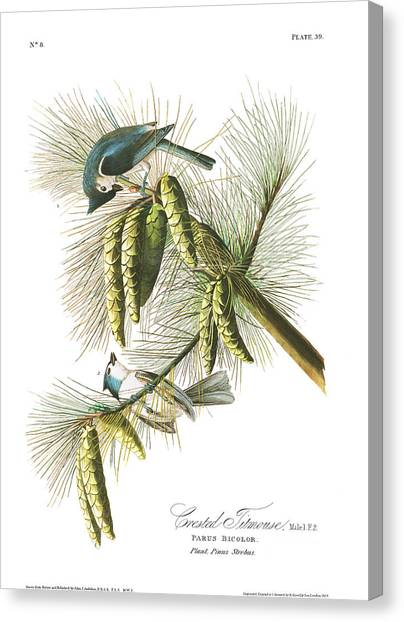 Titmouse Canvas Print - Crested Titmouse by John James Audubon