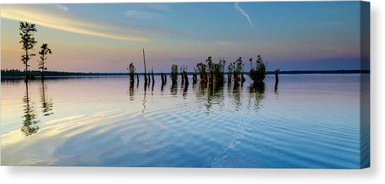 Great Dismal Canvas Print - Dismal Swamp 2016 by Kevin Blackburn