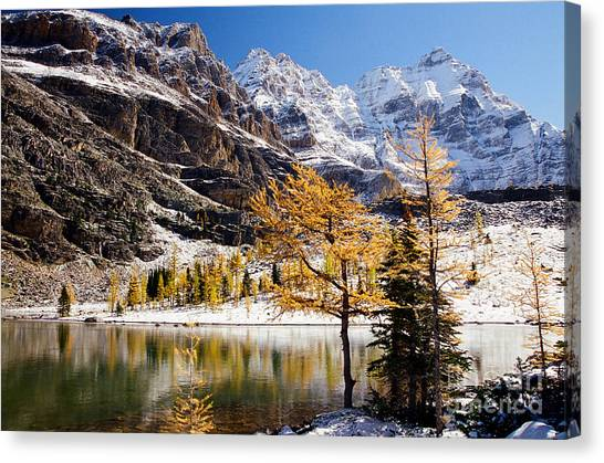 September Dusting Canvas Print by Frank Townsley