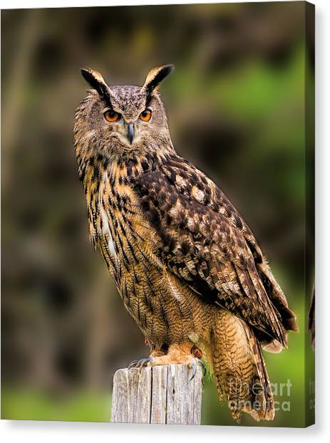 Eurasian Eagle Owl Perched On A Post Canvas Print