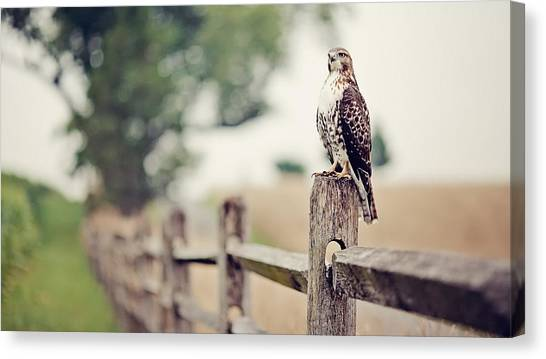 Woodpeckers Canvas Print - Falcon by Mariel Mcmeeking