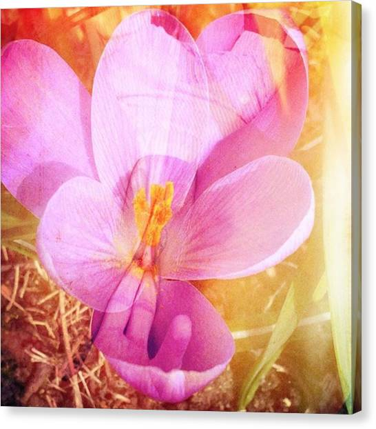 Erotic Canvas Print - #femaleart #erotica #femalenude by Her Flower In Bloom
