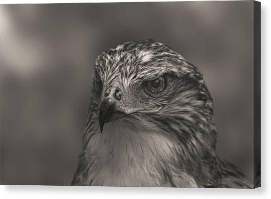 Ferruginous Hawk  Canvas Print