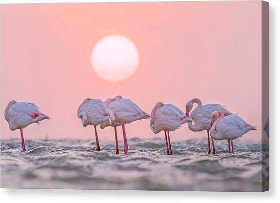 Sandpipers Canvas Print - Flamingo by Super Lovely