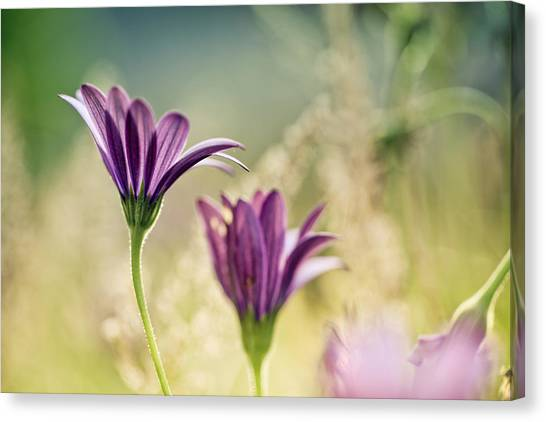 Purple Canvas Print - Flower On Summer Meadow by Nailia Schwarz