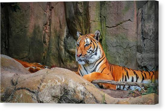 Fort Worth Zoo Tiger Canvas Print