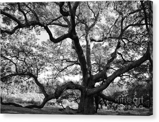 Connecticut Canvas Print - Granby Oak by HD Connelly