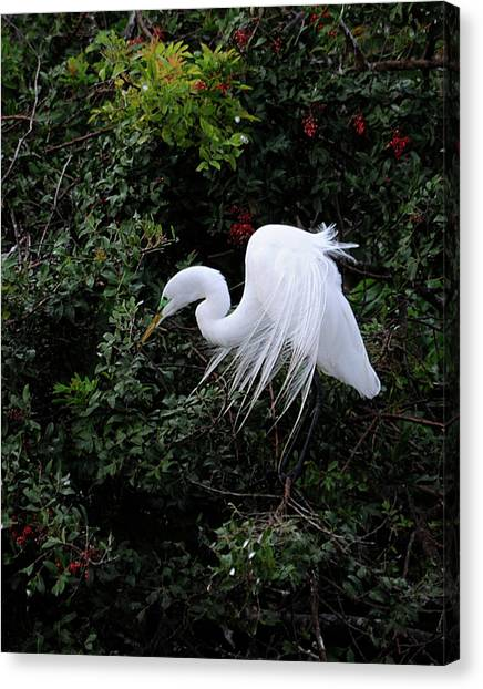 Great Egret Canvas Print by Keith Lovejoy