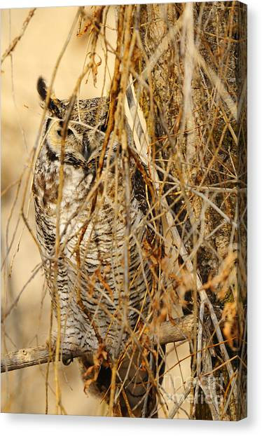 Great Horned Owl Canvas Print by Dennis Hammer