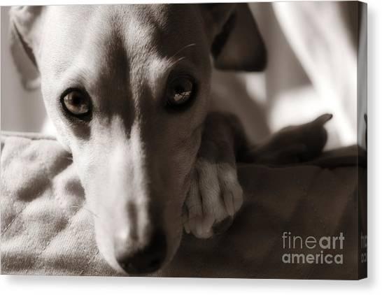 Heart You Italian Greyhound Canvas Print