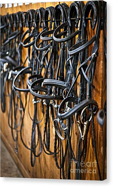 Tack Canvas Print - Horse Bridles Hanging In Stable by Elena Elisseeva