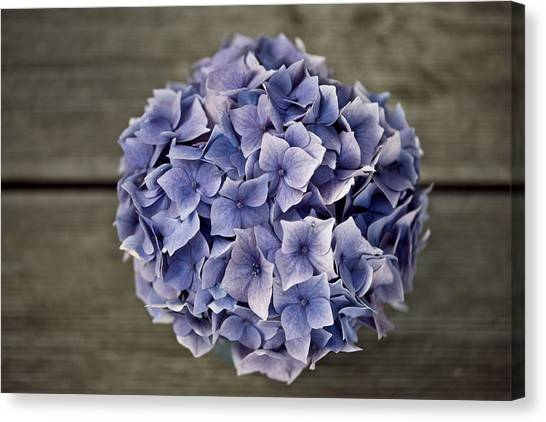 Metal Canvas Print - Hortensia Flowers by Nailia Schwarz
