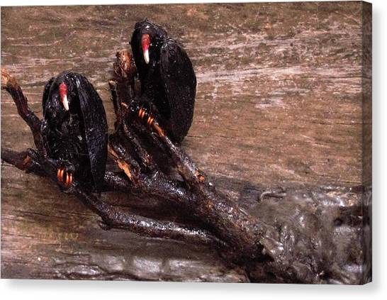 2 Hulking Vultures Canvas Print